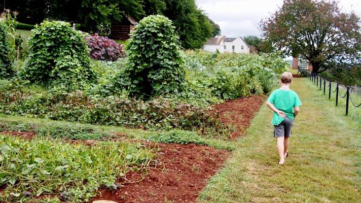 Walking Monticello's Two Acre Vegetable Garden