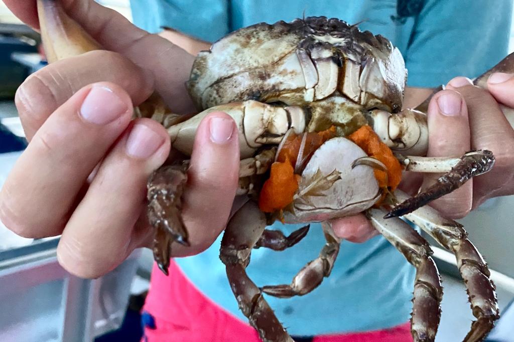 Vivid Orange Eggs of the Stone Crab