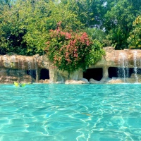 Discovering the Magic of Discovery Cove: The Answers to All Your Questions