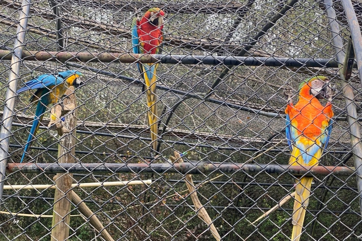 Rescued Parrots at the Animal Sanctuary