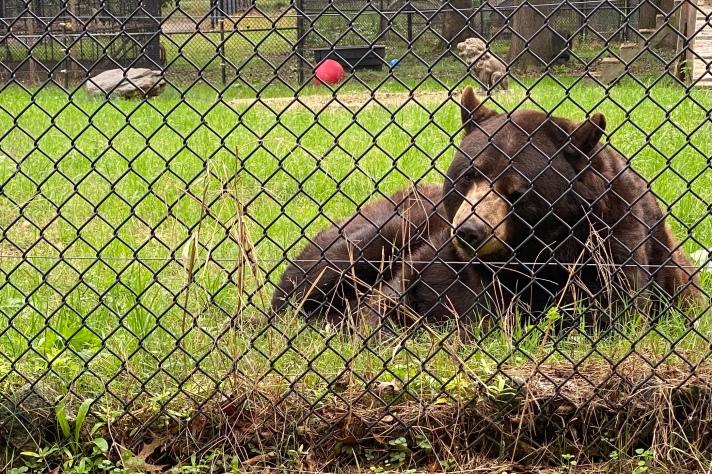 Bear Habitat at Noah's Ark Animal Sanctuary